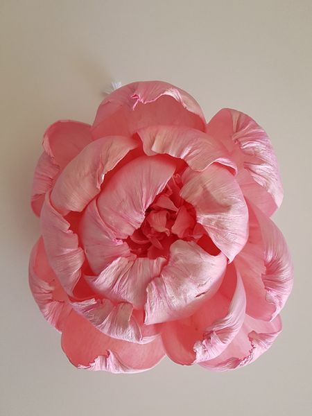 Duft Diffuser Blume Peony